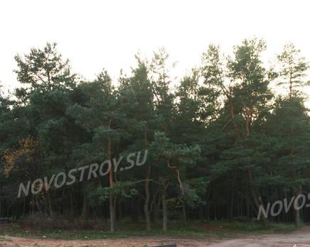Окрестности ЖК «Алданские сосны» (29.11.2013 г.), Декабрь 2013