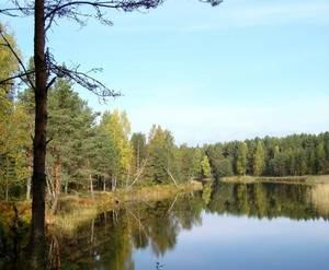 КП «Лесные просторы»