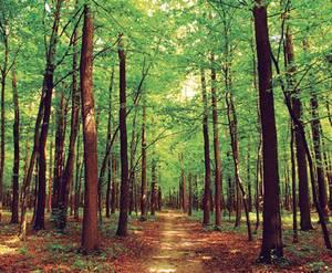 Лес вокруг КП «Красный Стан»