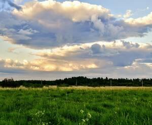КП «Зеленый лес»