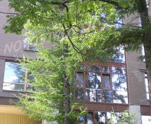 Малоэтажный ЖК «Софийский бульвар»: ход строительства