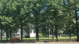 Локация «Полюстровский проспект»