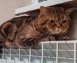 В Кировском районе взялись за неработающие системы отопления