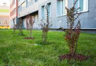 В Московском районе появится вишнёвый сад