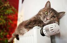 Вечерний Novostroy.su: Смольный решил когда включать отопление, дачи в Петербурге могут стать незаконными и ключевую ставку могут опять понизить