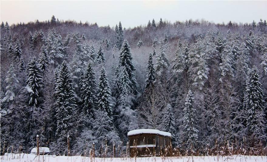 Веппский лес в Ленобласти