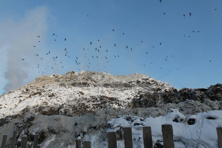 Жители Колтушей бьют тревогу: штрафы не останавливают нарушителей,  «Северную Самарку» продолжают «заваливать» мусором